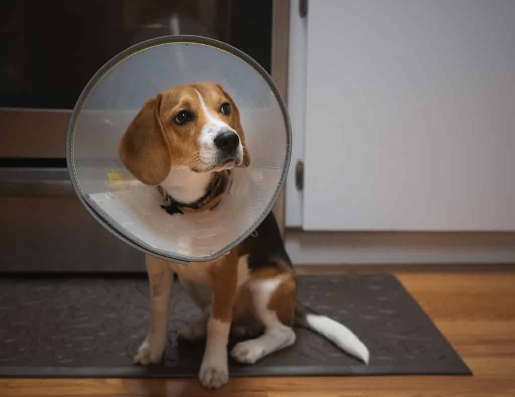 how to get rid of dog mites - Monica's recommendations