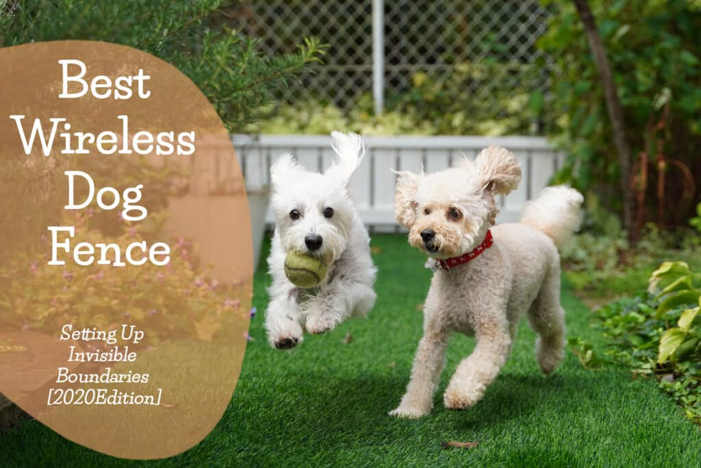 Best-wireless-dog-fence-Feature