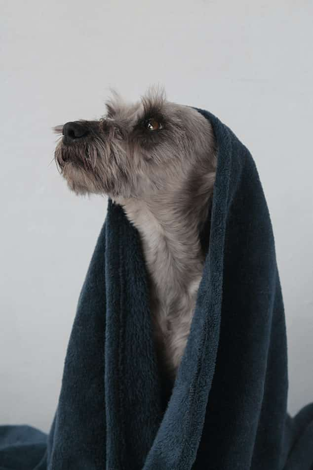 Dog Allergy To Shampoo