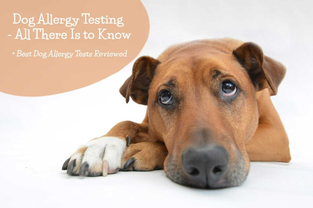 Dog Allergy Testing - Ultimate Guide