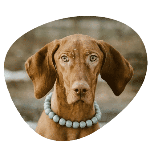 Dogs-with-long-ears-featurete