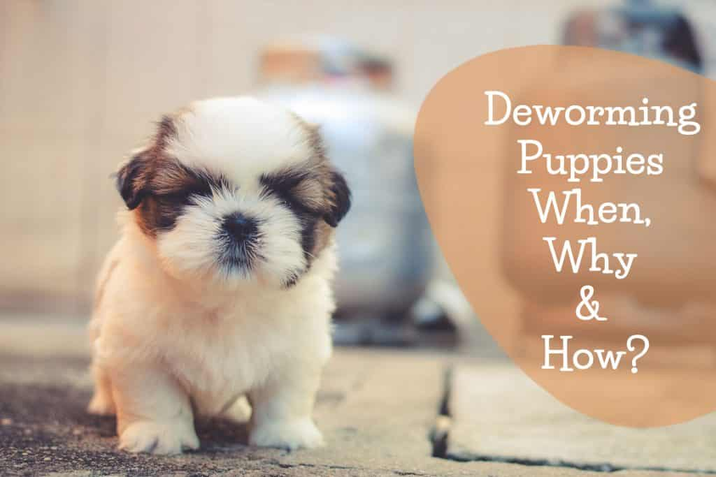 Deworming Puppies - Feature