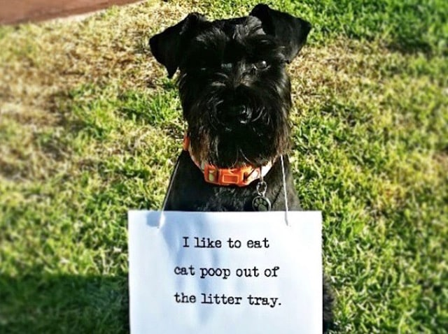 guilty - ate cat poop today