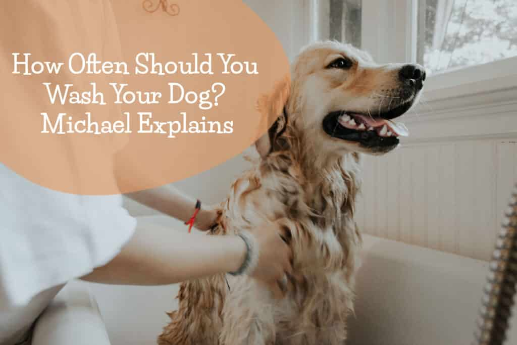 how often should you wash your dog - Michael explains!