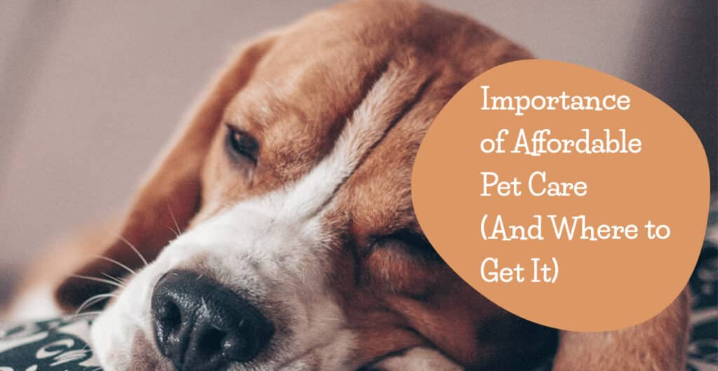 affordable-pet-care-featured