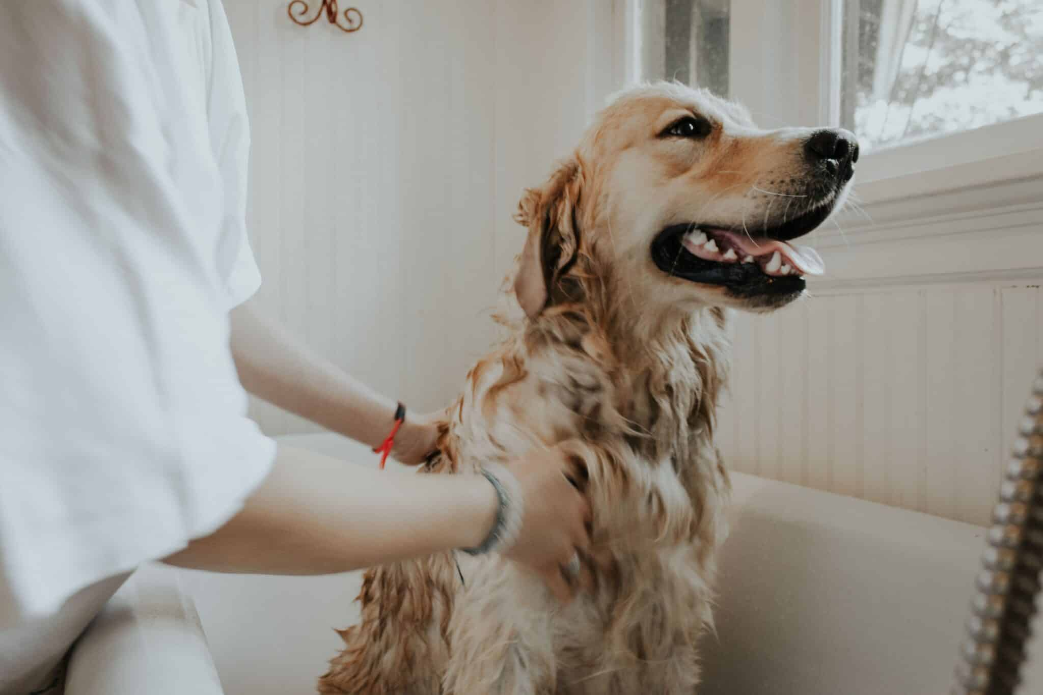 handling dog allergies to cats