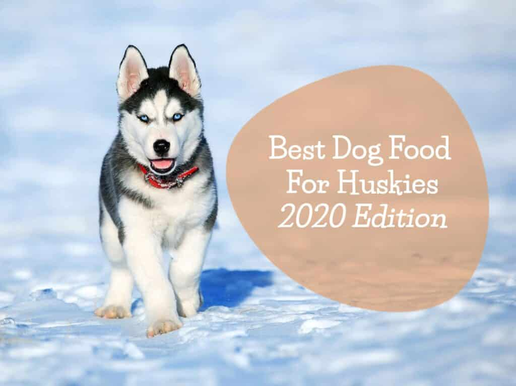 best-dog-food-for-huskies---feature
