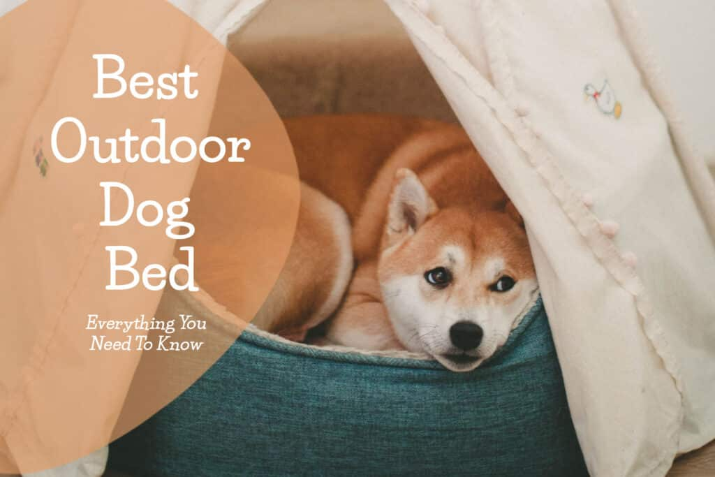 outdoor dog bed buying guide