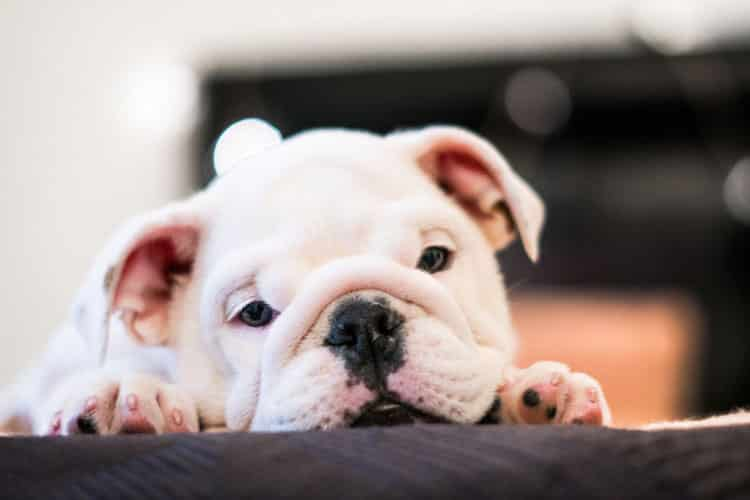 signs that your puppy has worms