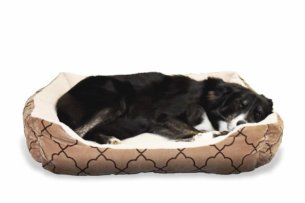 best outdoor dog bed - buying guide