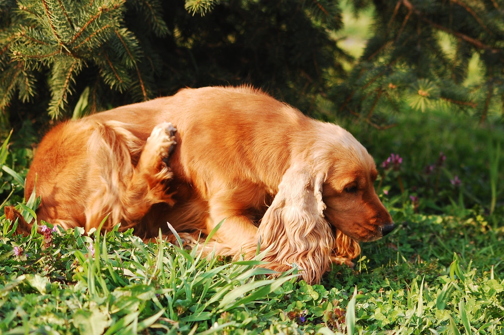 what are the symptoms of dog allergy to cats