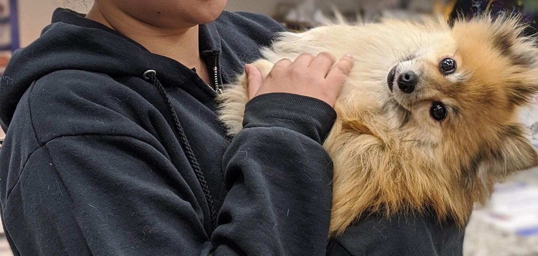 treatments for dog flea allergy