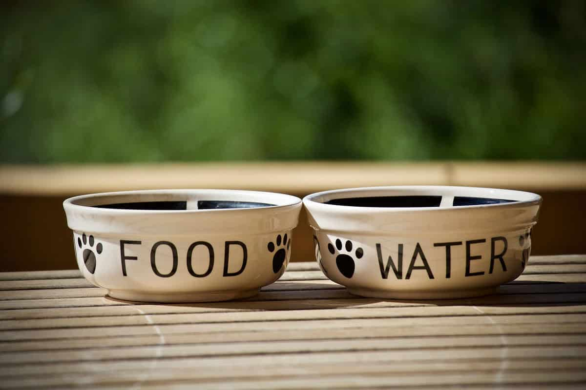 dog-food-for-kidney-disease---buying-guide