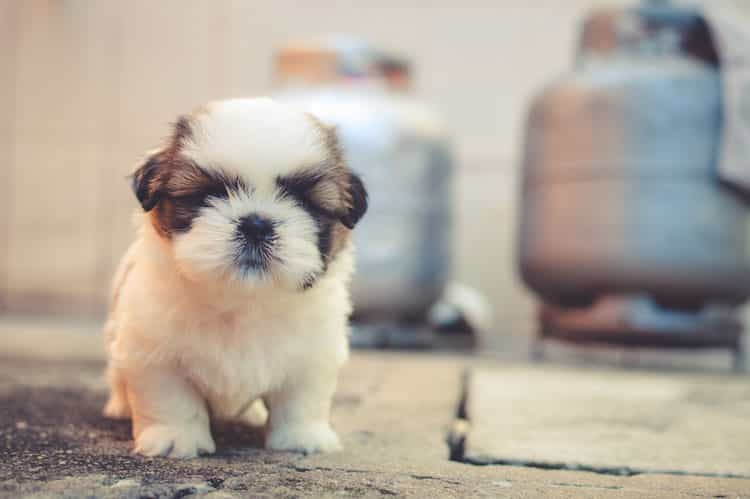 deworming puppies - prevention is the best treatment