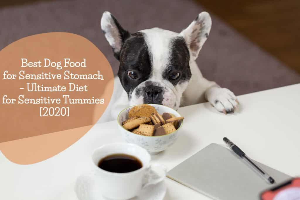 best dog food for sensitive stomach - Michael's buying guide