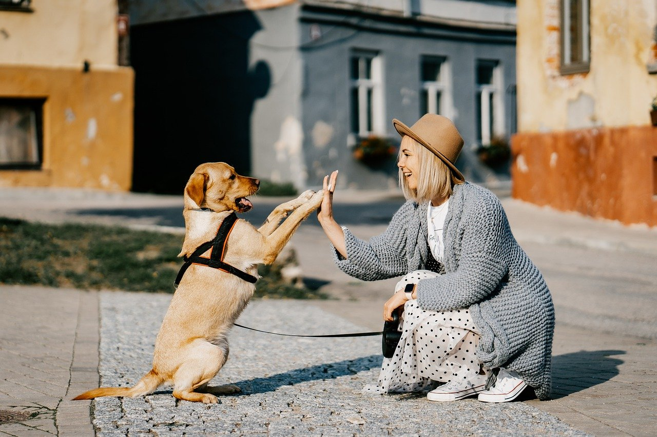 a dog and its owner giving a high five