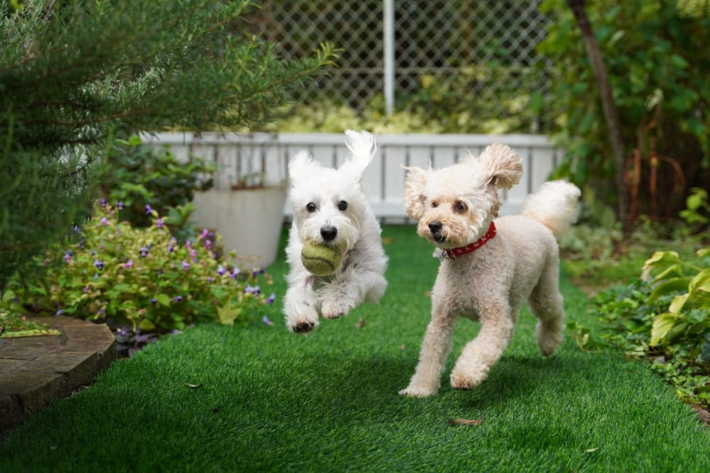 Features To Consider When Choosing the Best Wireless Dog Fence