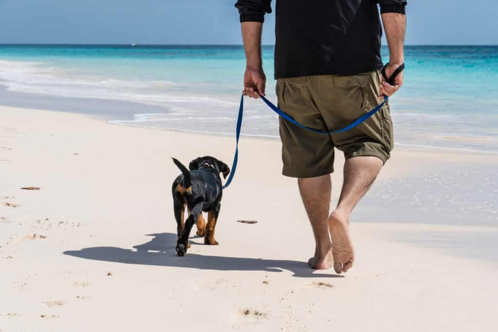having a reliable leash is mandatory, especially on the beach