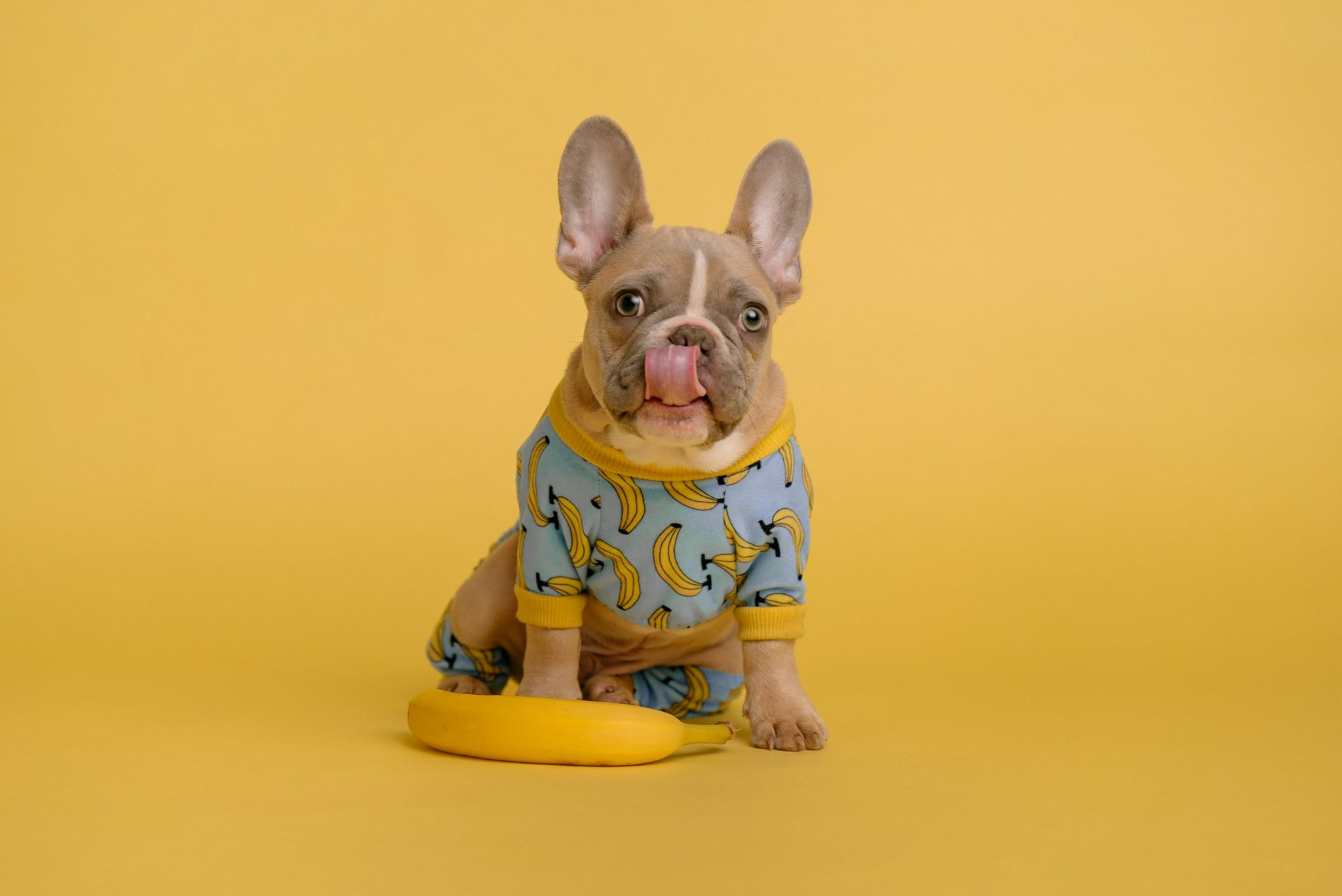 are bananas good for dogs?