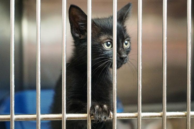pet-adoption-league-2