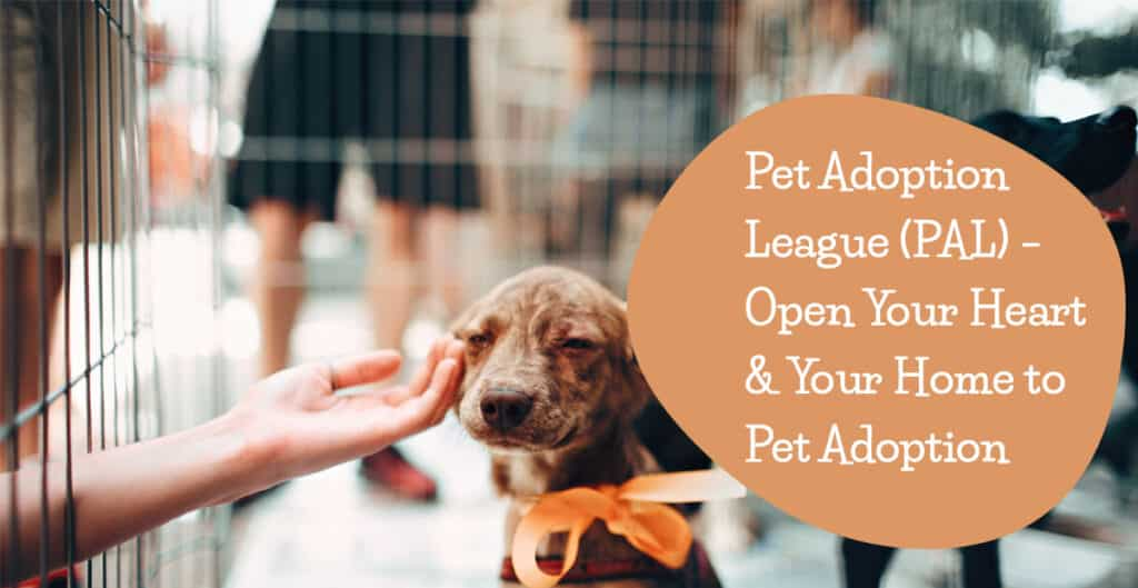 pet-adoption-league-featured