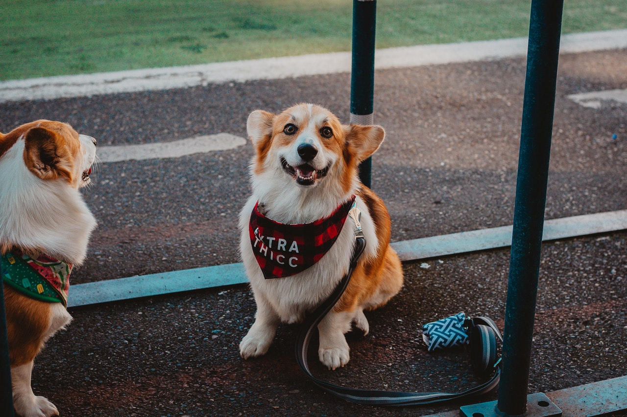 best dog leash - buyers guide and reviews
