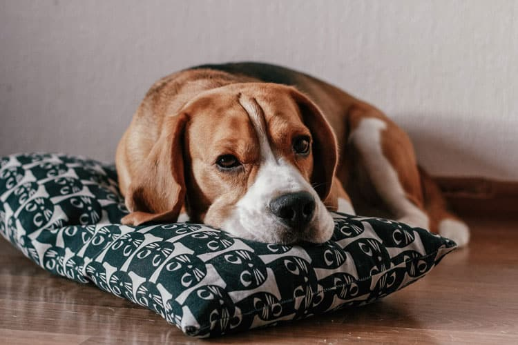 melatonin for dogs - yes or no?