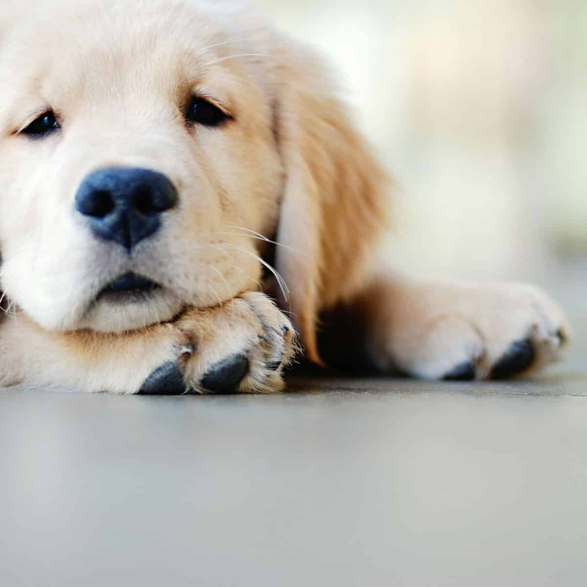 disinfect your home after dealing with dog mites