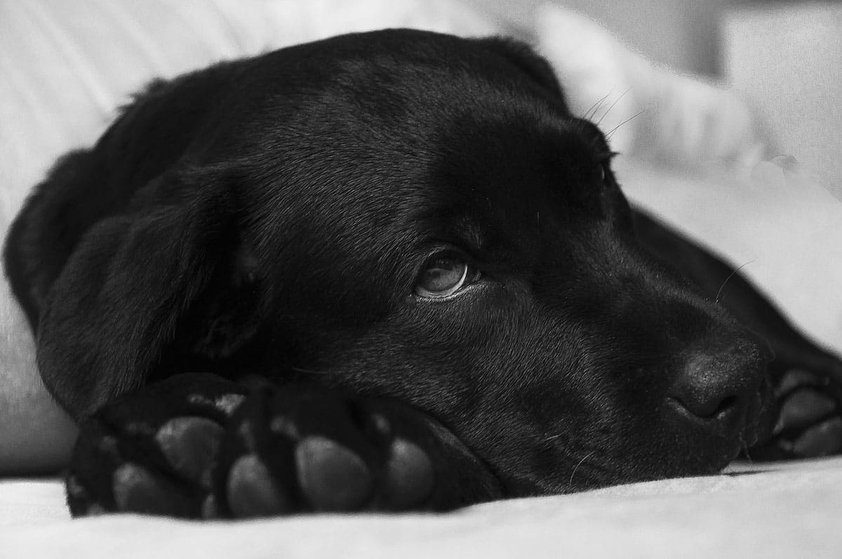 sick-doggo - kidney disease dog food buying guide
